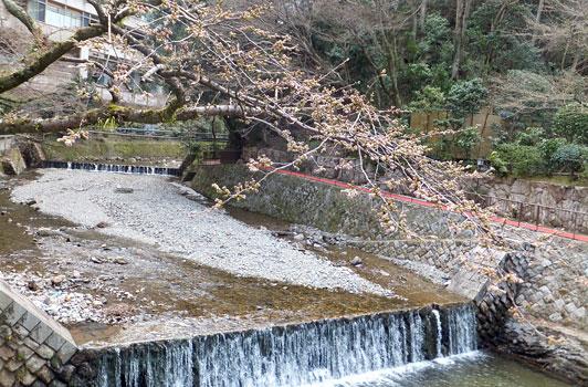 3-29桜01