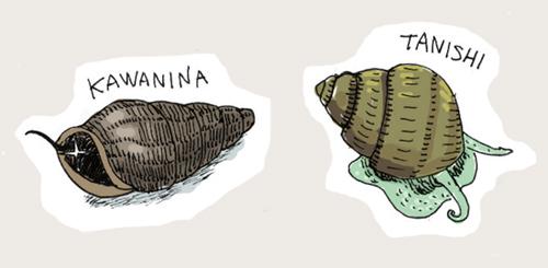 カワニナ&タニシ