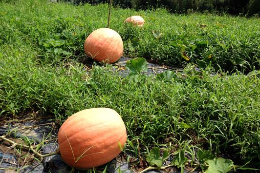 pumpkin2014-01