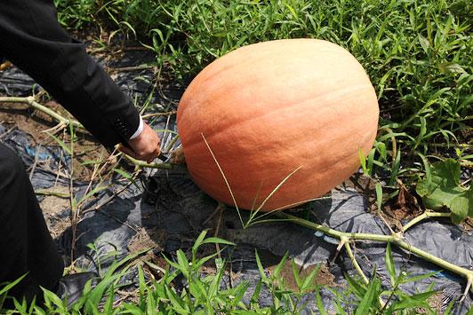 pumpkin2014-03