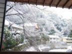 昨日1月12日の雪風景